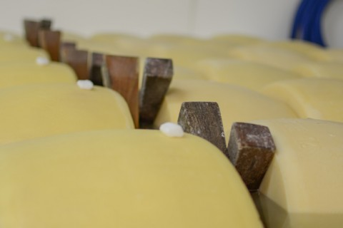 Forme di Parmigiano Reggiano prodotto di montagna in salamoia